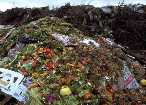 Thanksgiving Food Waste Facts
