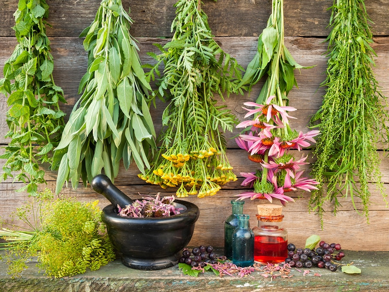 bunches of healing herbs on wooden wall mortar with dried plants and bottles herbal medicine