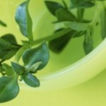 Plant Based Medicine