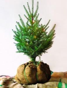 Green Holiday Tips: LED Lights